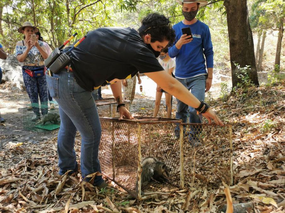 Reubica Zapopan fauna silvestre en el Parque Ecológico Huilotán